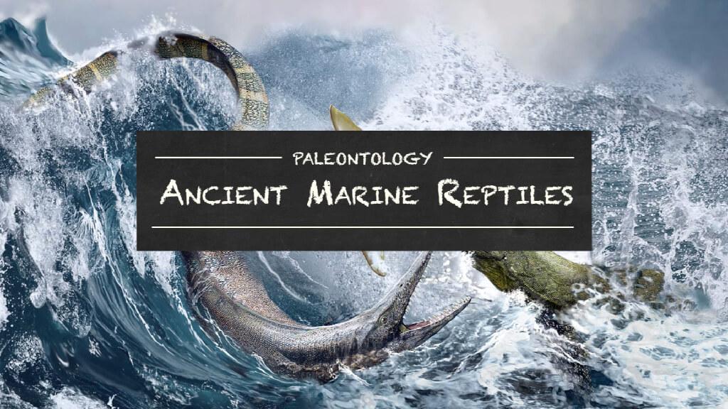 Paleontology---Marine-Reptiles-Main